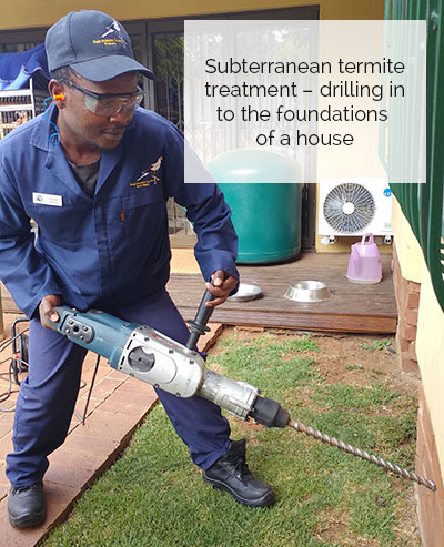 Termite Control West Rand Tel 063 693 3555 Pest Invasion Control West Rand